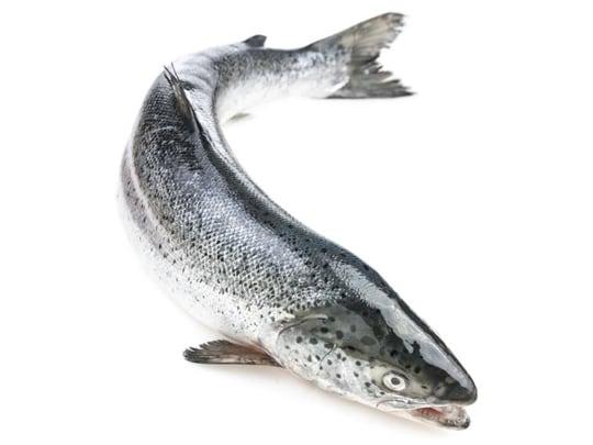 Salmon Blacksea